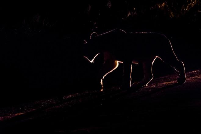 night time prowl
