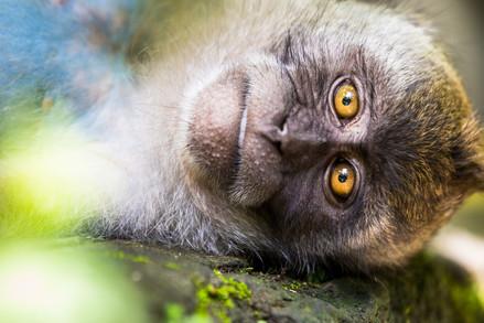 Sacred Monkey Sanctuary