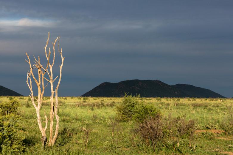 Blue Hour in Madikwe