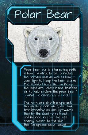 Adaptation Card Polar Bears.png