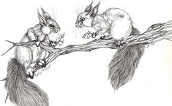 Squirrel Debate