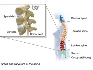 Yoga & Spine Health