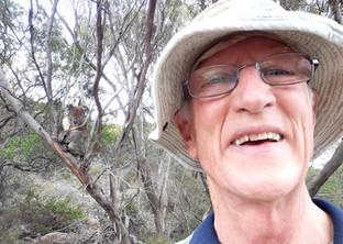 A Koala and Bush Fire Update