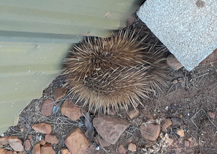 Don't let an Echidna get in your shed and other snippets