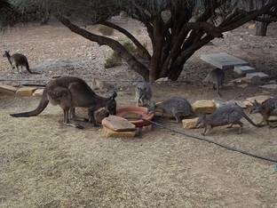 Thirsty Wildlife