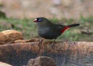 Have you seen this bird on KI ?