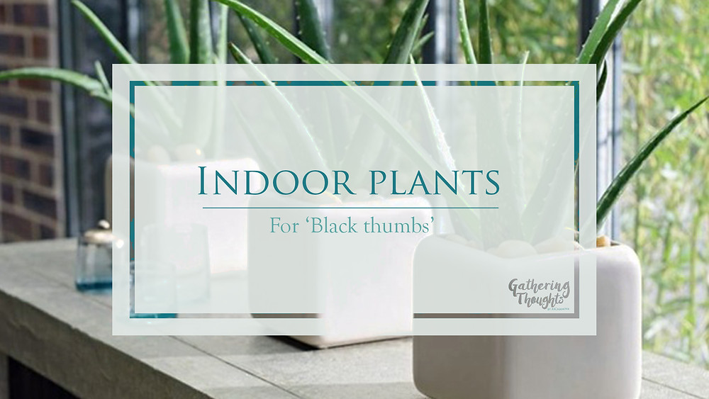 Indoor plants for Black Thumbs - Gathering Thoughts