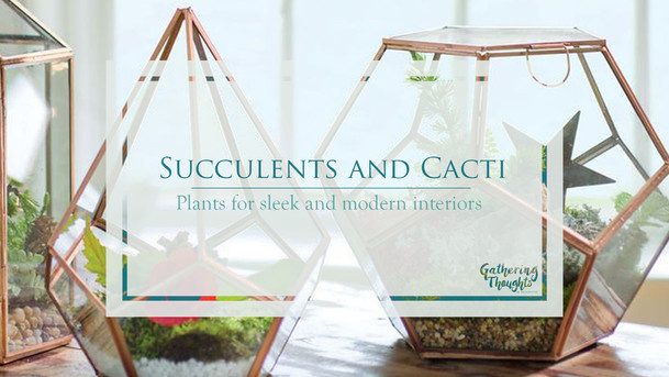 Succulents and Cacti - Plants for sleek and modern interiors