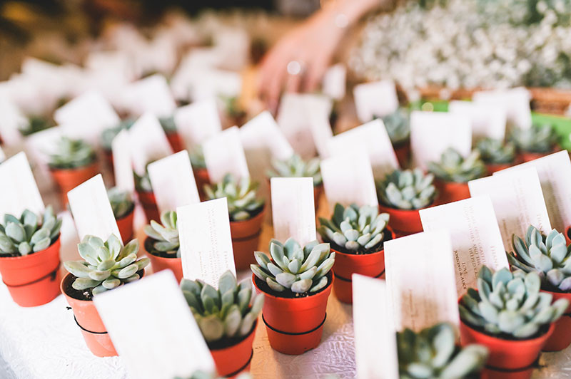 Succulent as wedding favour