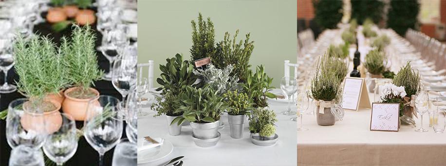 Pot plants centerpieces - Gathering Thoughts