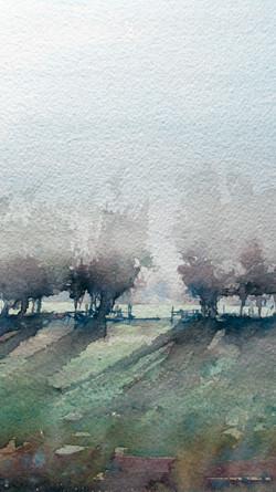 Morning Sunlight in the Trees, Tipton St John, Devon