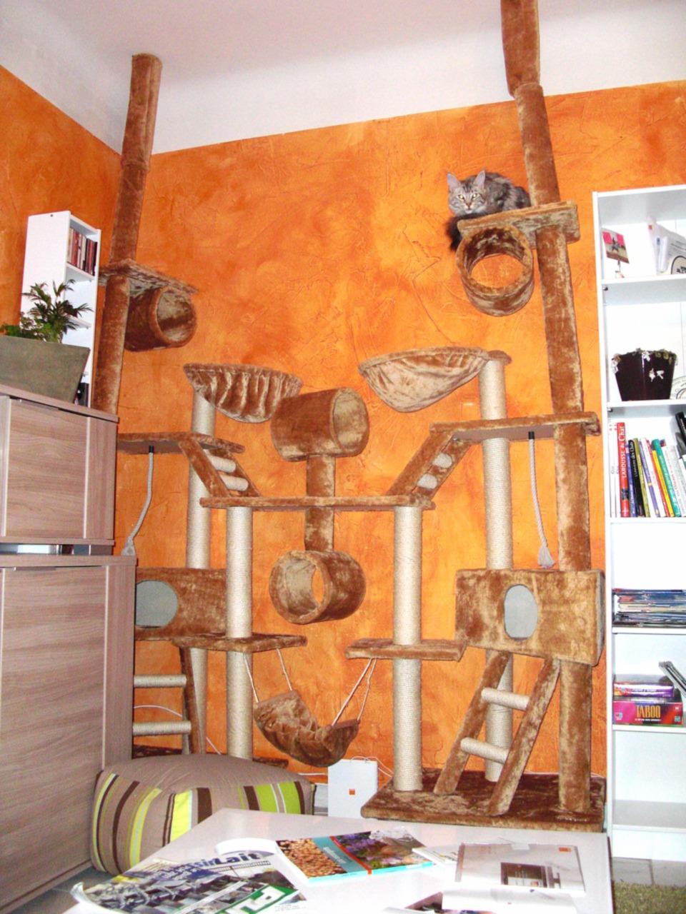 Mon 1er arbre à chat