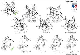 Illustration Maien coon 2 sur 2.jpg