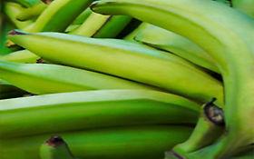 el platano verde es malo para el colesterol