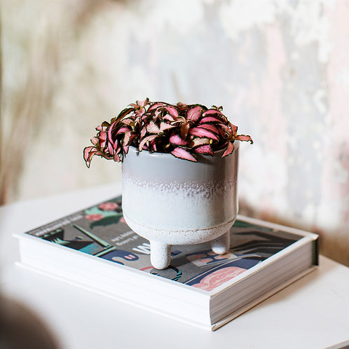 Small grey ombre planter