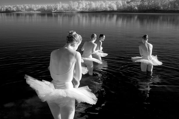Swans copy.jpg