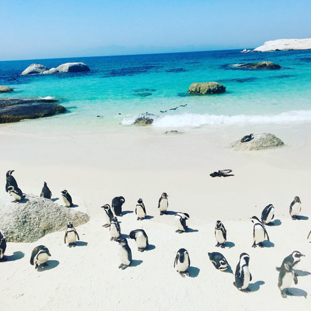 South Africa - a penguin paradise