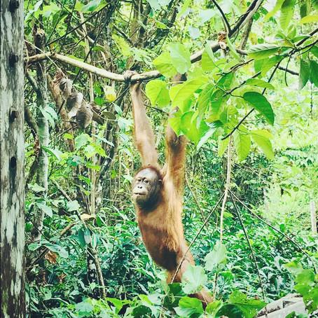 Welcome to the (Borneo) jungle!