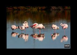 Flamingo 5322