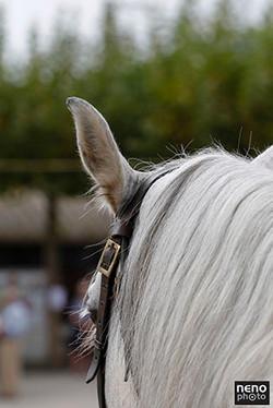 Ribatejo Cavalo
