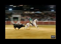 Cavalo 2946