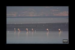 Flamingo 5222