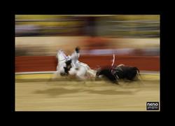 Cavalo 0158