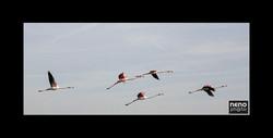 Flamingo 5365