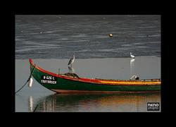 Rio Tejo 5229