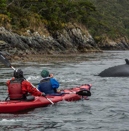 Kayak con ballenas