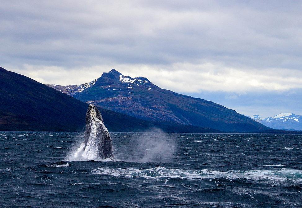 avistamiento ballena punta arenas