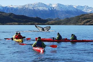 kayak ballenas punta arenas