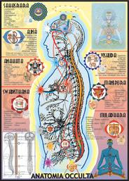 Anatomia Occulta - Chacra