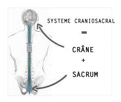 syst-craniosacral copie.png