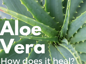 Aloe Vera - How Does It Heal?