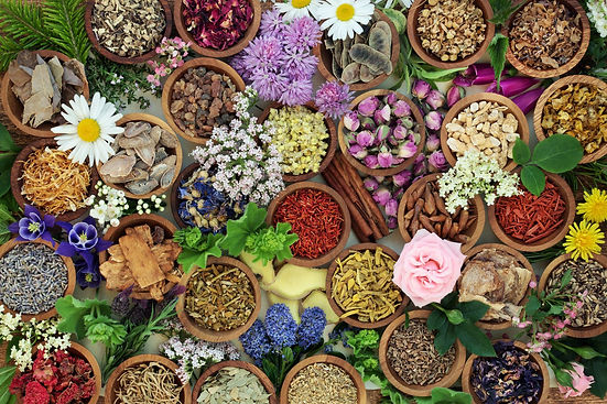 Herbs in bowls AdobeStock_194811046.jpeg