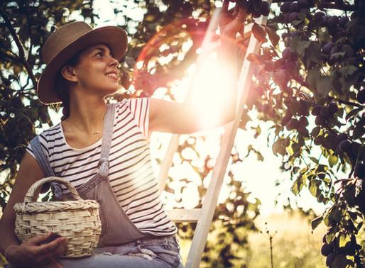 Pasar tiempo en el jardín mejora la salud