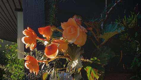 Like a painting on our front porch . . .