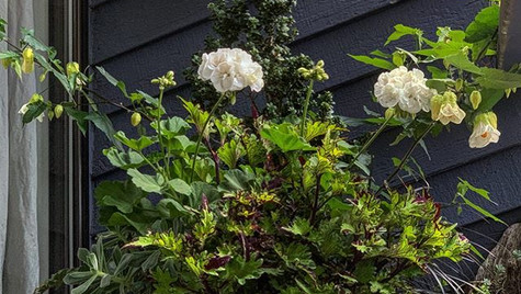 Front deck containers- the white pops ag