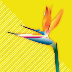birdofparadise-lines-01.png