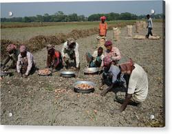 potato-harvesting-in-dhaka-nurphoto