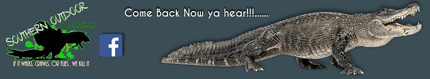 Osceola Turkey, Alligator, Wild Boar