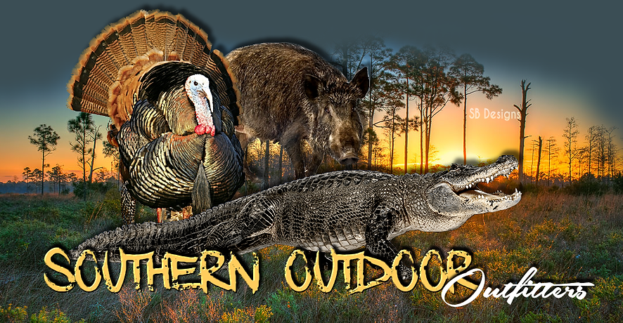 Osceola Turkey, Alligator, Wild Hog