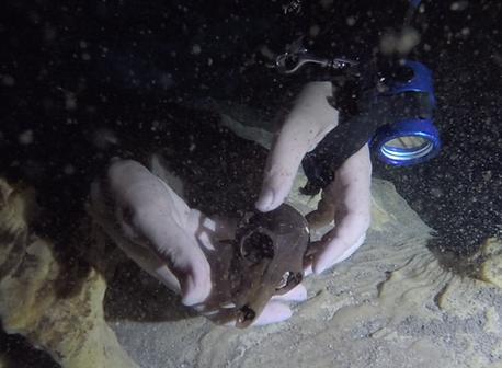 Klukkert Pachylemur skull fossil underwater cave scuba underwaterlightdude
