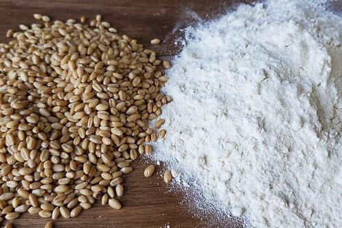White Sonora Flour-Whole Grain