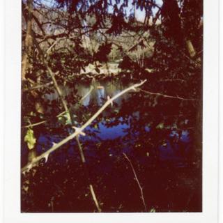 3. Hampstead womens pond Rhona.png