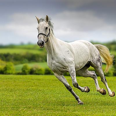 Grace & the ponies