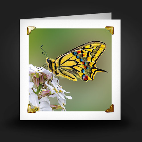 Swallowtail Butterfly - Greetings Card
