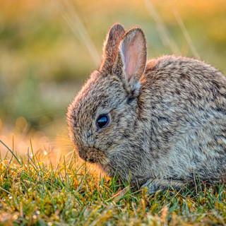 Rabbit >>