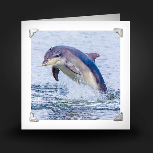 Breaching Bottlenose - Greetings Card